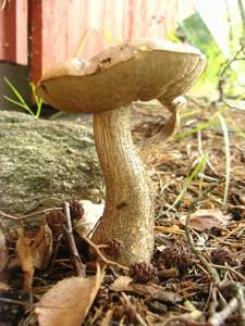 13 ein Pilz