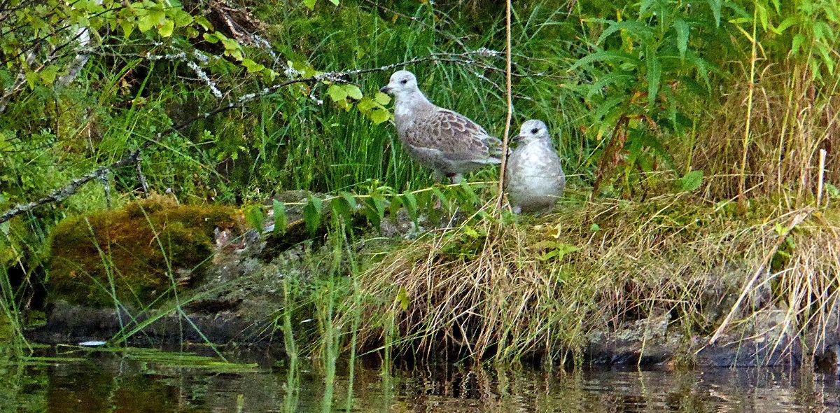 Vögel Bucht Canadier Tour